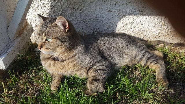 DAFNE bellissima gatta dagli occhi smeraldo