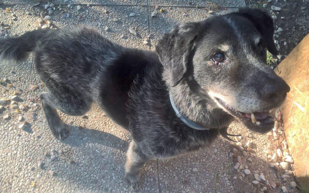 WILLY cane da adottare al Canile di Rimini