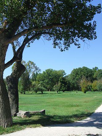 Rimini Verde. Alberi in città. Chiediamo un piano del verde.