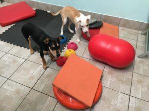 Bartolo e Biondo in attesa dell'esercizio.